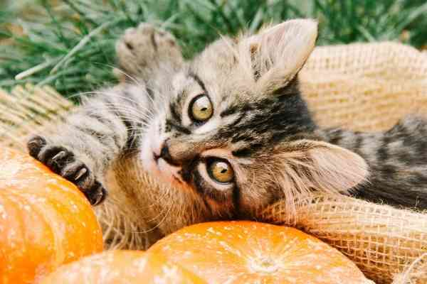Cats For Adoption Near You – Welcome to Cat Adoptions Central